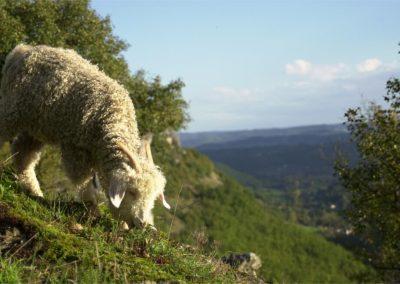 La Ferme de Siran - Lot - Midi-Pyrénées