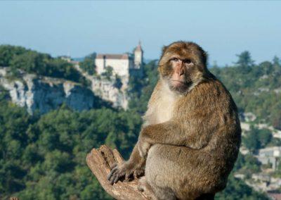 La Forêt des singes à Rocamadour - Lot - Midi-Pyrénées